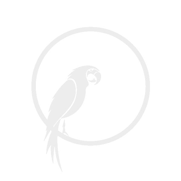 Kare Decofiguur Parrot Bluegreen